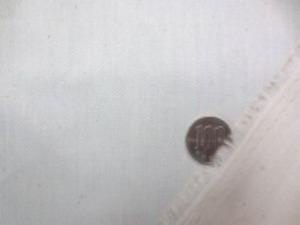 シーティングくらいの厚さの コットンヘリンボーン 生成 シルケット サンフォライズ加工で すごくいい風合いです。 ヘリンボーンの幅 4mm